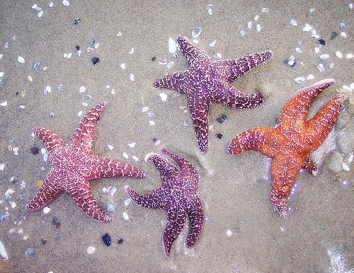 Dancing with the Starfish by Orange County Girl